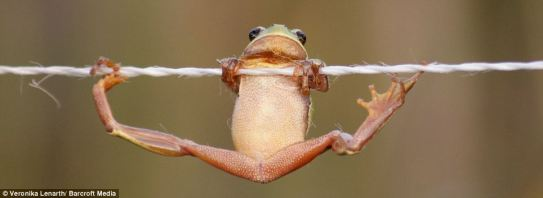 frog hanging on